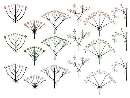 Set of vector different types of inflorescence, scientific scheme of flower on stalk (botany), isolated on white. Stock Vector - 16006808