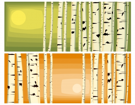 Vector illustrations of horizontal background with many birches trunks in sun light in green and orange tone with space for text. Vector