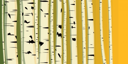 Vector illustration of horizontal background with many birches in sunset light. Stock Vector - 16006804