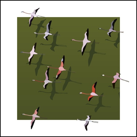 flamingos: Vector illustration abstract background: top view of flamingos flying over the green river with shadows in white frame.