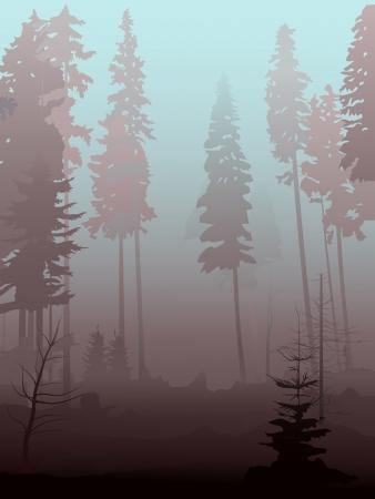for�t r�sineux: Vector illustration du brouillard dans la for�t de conif�res dans la matin�e