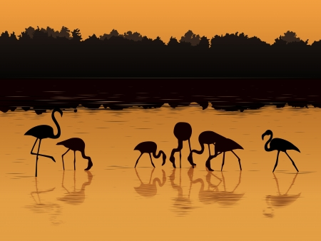 flamingos: Vector illustration background of flamingos at sunset in the river in shadows style  Illustration
