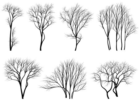 willow: Set of vector silhouettes of trees without leaves during the winter or spring period.