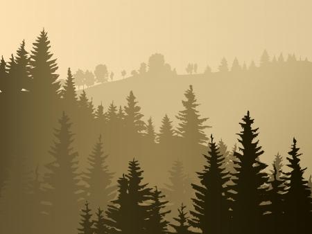 Selvaggio legno di conifere in una nebbia mattina