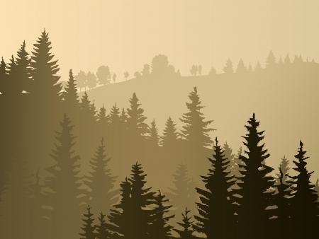 sunset tree: Wild coniferous wood in a morning fog