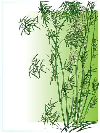 Bamboo in the Asian style in green frame. Stock Vector - 16449905