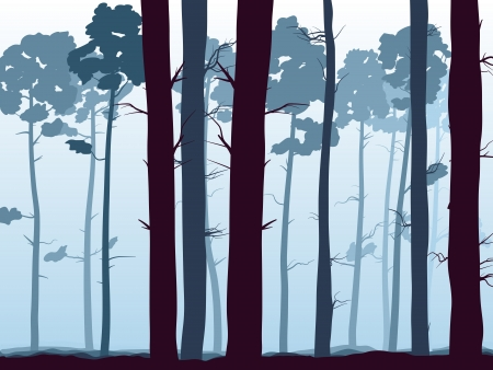 coniferous forest: background with many pine trunks (coniferous forest) in the morning mist. Illustration