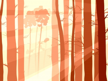 many pine trunks (coniferous forest) with sunlight in the morning mist. Vector