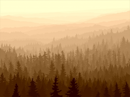 sunset tree:  panorama of wild coniferous forest in morning fog.