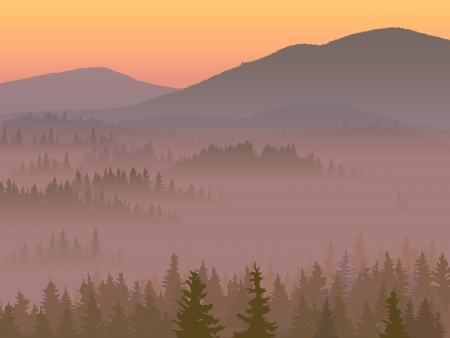Valley in the middle of coniferous wood in a morning fog