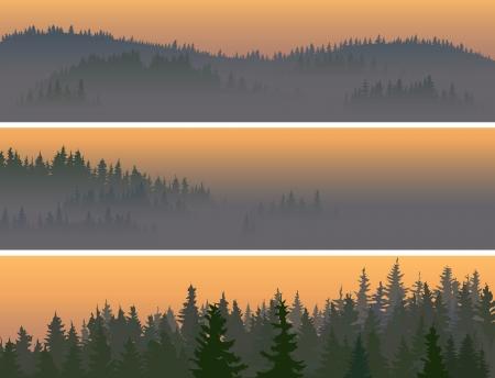 Banners horizontales del valle en el centro de la madera de coníferas en una niebla de la mañana.