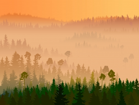 pine tree silhouette: Valley in the middle of coniferous wood in a morning fog.