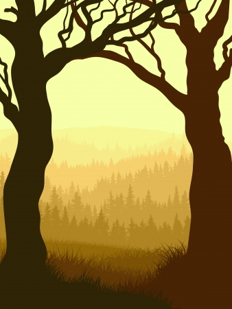 undergrowth: Vector illustration of tree trunks with grass and coniferous forest in yellow tone. Illustration