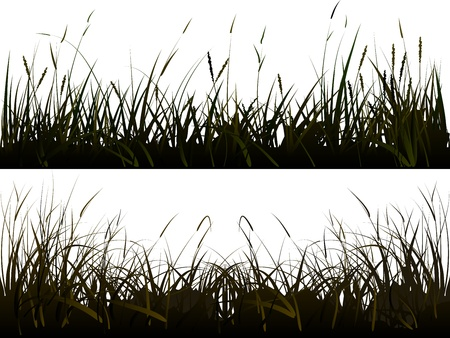 grass silhouette: Vector of isolated  background of realistic meadow grass in shadow style.