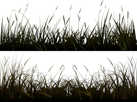 rietkraag: Vector van geïsoleerde achtergrond van realistische weidegras in de schaduw stijl.