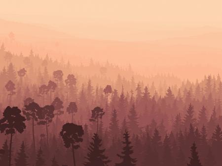 coniferous forest: Vector panorama salvaje de los bosques de con�feras en niebla de la ma�ana con pinos.