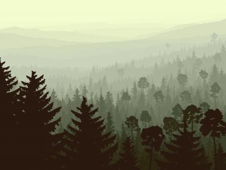 coniferous forest: panorama salvaje de los bosques de coníferas en niebla de la mañana con los abetos en primer plano.