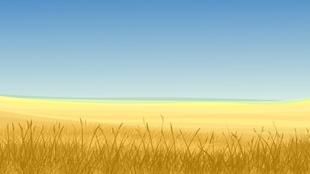 Vector horizontal illustration: field of yellow grass against blue sky in hot day.