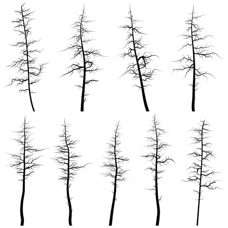 cedar: Set of vector silhouettes of coniferous old trees without leaves (deadwood). Illustration