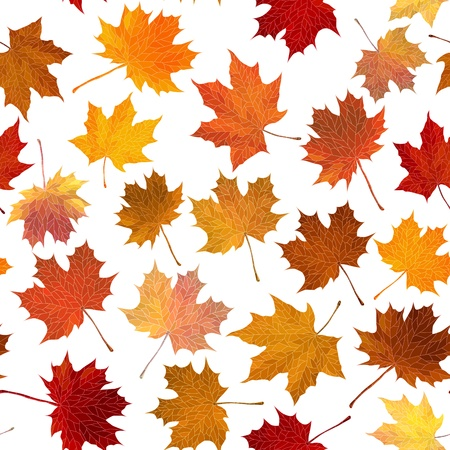 seamless background: autumn maple leaves on white. Vector