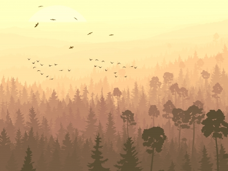 panorama of wild coniferous forest with pines and flock of birds flying toward rising sun. Vector