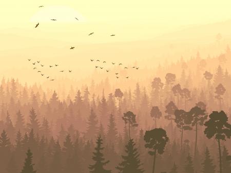 coniferous forest: panorama salvaje de bosque de con�feras con pinos y multitud de aves que vuelan hacia el sol naciente.