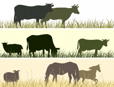horses in field: Horizontal banner  silhouettes of grazing animals  cow, horse, sheep   Illustration