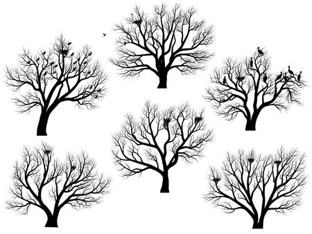 bandada pajaros: Conjunto de siluetas de aves anidan en árboles de hoja caduca grande sin hojas durante el invierno o la primavera.