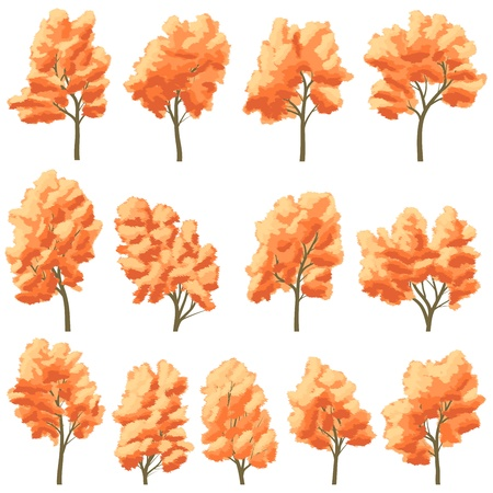 willow trees: Set of deciduous trees in autumn with orange leaves.