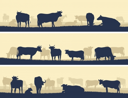 cows grazing: Horizontal vector banner  silhouettes of grazing animals  cows and bulls