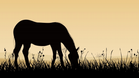 Horizontal vector illustration of horse grazing in the meadows at sunset (twilight). Vector