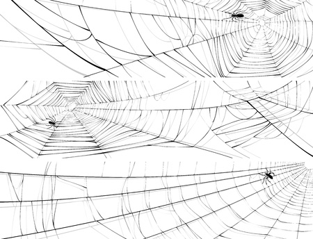 hexapod: Vector horizontal banner of silhouette of web of spider, isolated on white.