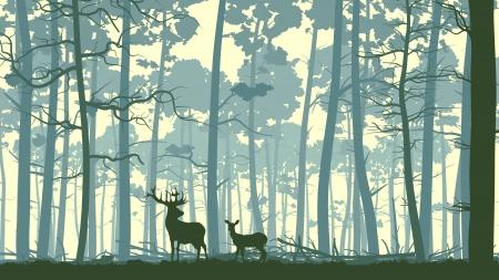 el cedro: Resumen de vectores de ilustraci�n de ciervos salvajes en el bosque con troncos de �rboles.