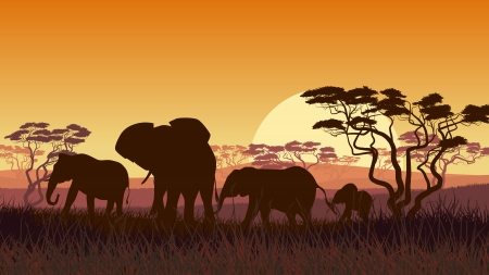 Horizontal vector illustration of wild elephants in African sunset savanna with trees. Vector