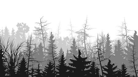 coniferous forest: Bosque ilustraciones vectoriales horizontales copas de los árboles de coníferas (pino, abeto, cedro).