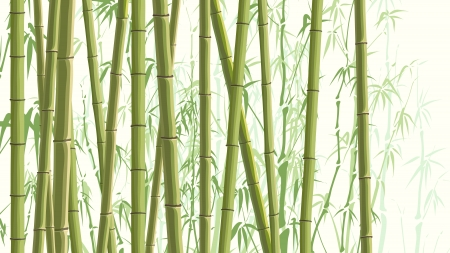 traditionally chinese: Vector horizontal illustration with many trunks bamboos tree in green color.