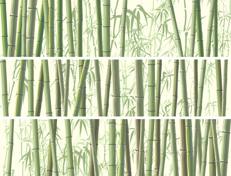 traditionally chinese: Set of vector horizontal banner with many trunks bamboos tree in green color. Illustration