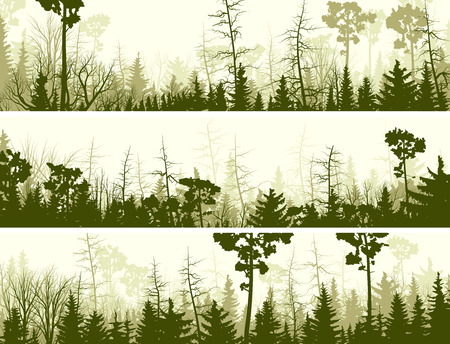 copse: Set vector horizontal banners of coniferous treetops forest (pine, spruce, cedar).