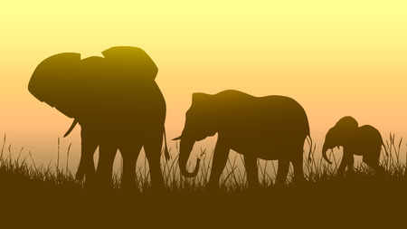illustration family of elephants in African sunset savanna. Vector