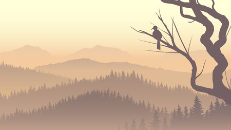 fog forest: Vector panorama of wild coniferous forest in morning fog with bird on tree branch.