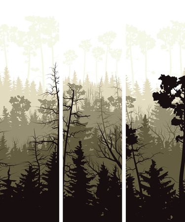 copse: Set vector vertical banners of coniferous treetops forest (pine, spruce, cedar).