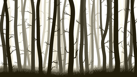 grove: Vector horizontal illustration of many pine trees with grass. Illustration