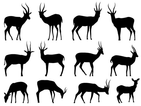 Set vector silhouettes of African antelope. 向量圖像