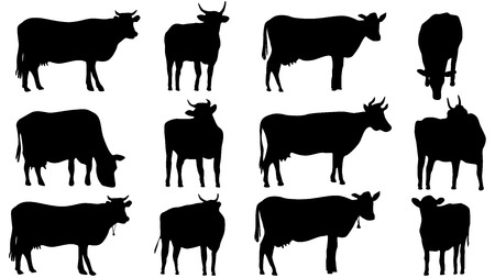 Set vector silhouettes of grazing cows and bulls.   Illustration