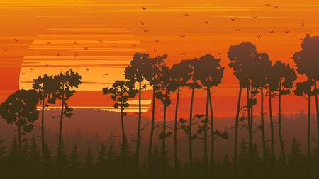 coniferous forest: Horizontal naranja ilustraci�n bosque de con�feras al atardecer con la bandada de p�jaros.