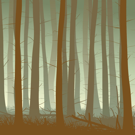 twilight: Vector square illustration inside misty coniferous forest with grass in green tone.