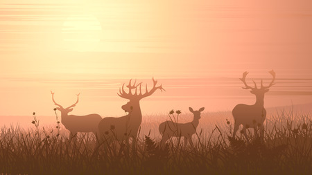 Vector horizontal illustration of wild deer on meadow at sunset.