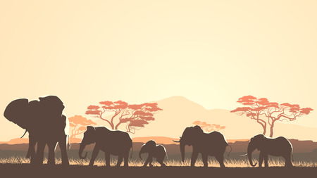 steppe: Horizontal vector illustration wild herd of elephants in African sunset savanna with trees.