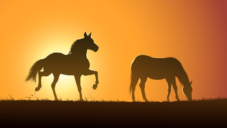 horses in the wild: Horizontal vector illustration pair of wild horses in meadow at sunset.