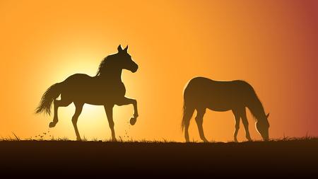 Horizontale vector illustratie paar wilde paarden in de weide bij zonsondergang. Stockfoto - 37602013